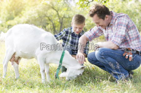 father and son petting goat