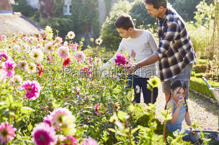 father and son picking flowers in