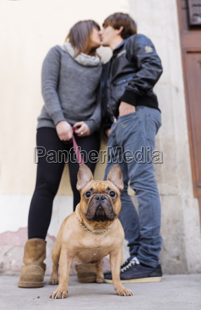 retrato do buldogue frances com os