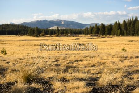 vista da paisagem intocada em tolumne