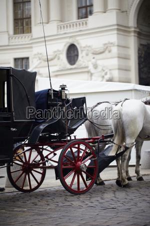 cidade cavalo animal viena caucasiano europeu