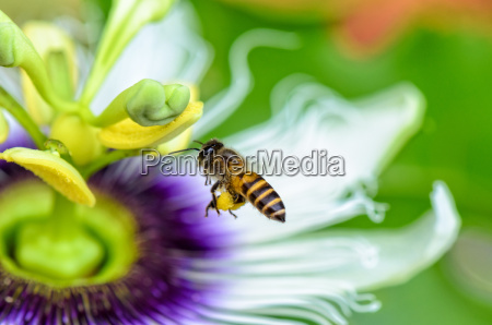 close up flor planta exotico voar