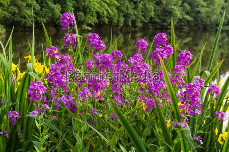 flor planta