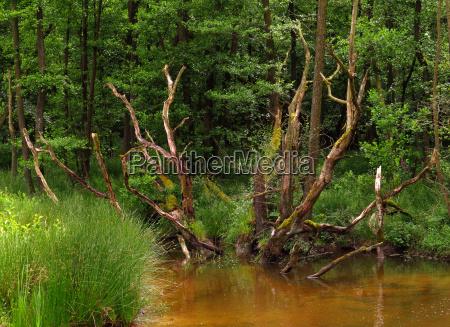 pantano reserva natural wetland