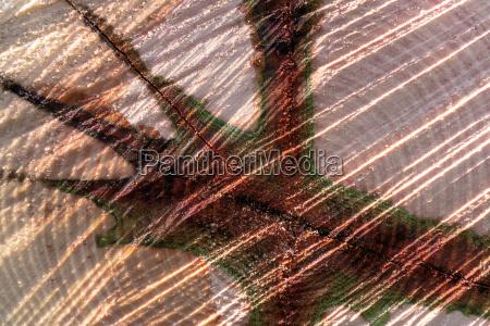 madera tronco abstracto nucleo modelo fondo