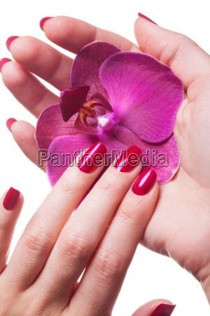 unhas manicured isoladas com flor da