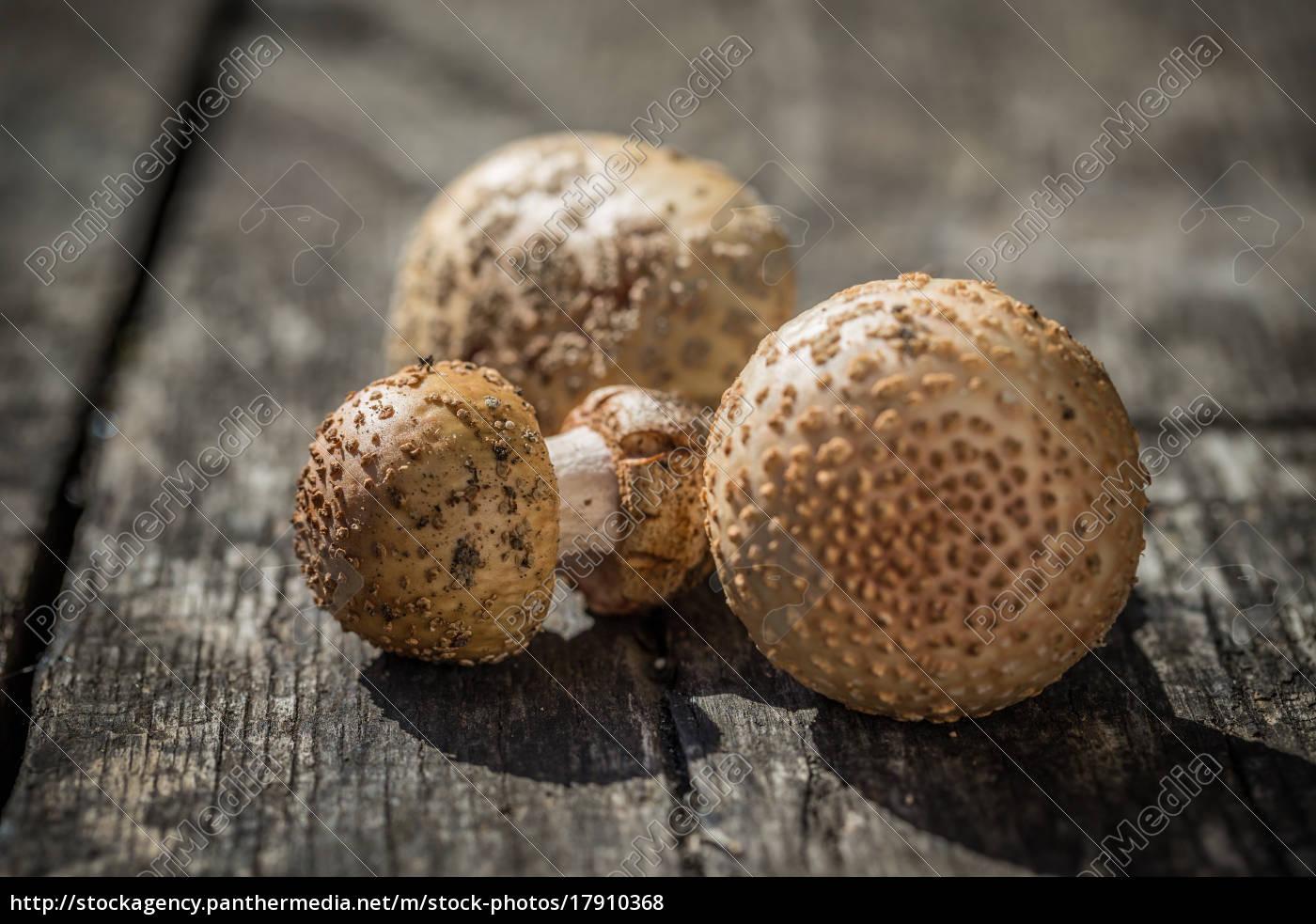 blusher, chamada, de, cogumelo - 17910368