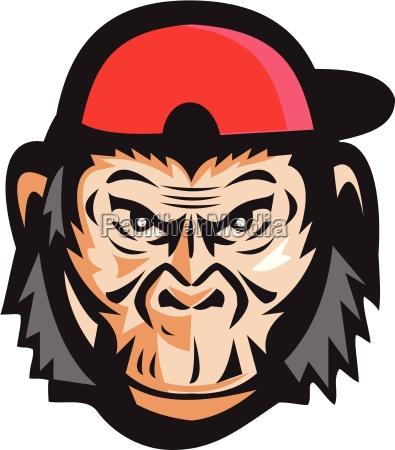 irritado chimpanze cabeca bone de beisebol