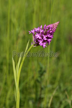 flor orquidea planta