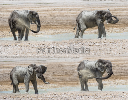 animal africa elefante sujeira ao ar