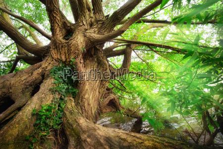 impressive tree trunk in beautiful light