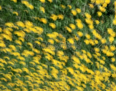 campo, de, flores - 18766148