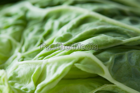 close up of a cabbage leaf