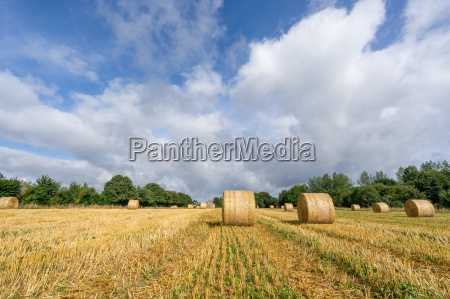 agricultura campo fardos de palha fazenda