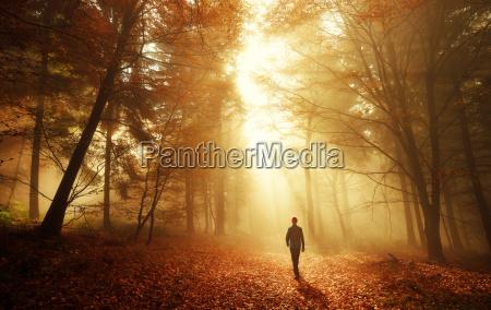 caminhe na floresta com uma atmosfera