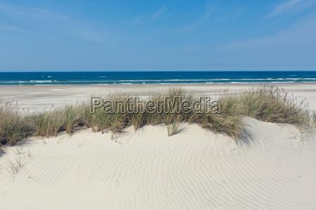 duna com grama na frente do