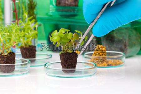 forskning rod unge laboratorium planter