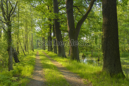 path through forest saxony germany