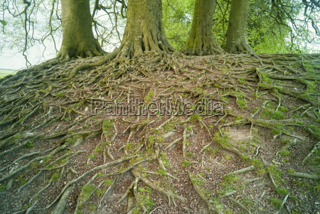 view of tree roots and trees