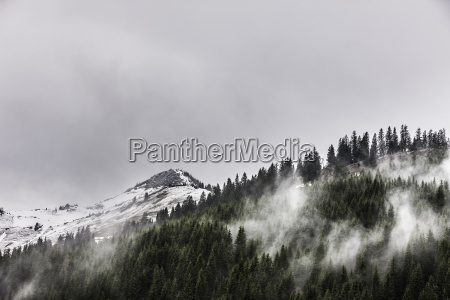 view of forest mist and snow