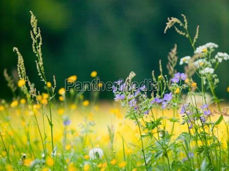 flowers in a field at la