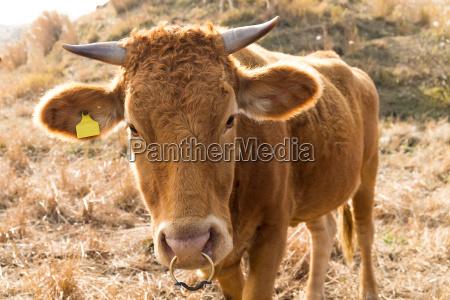 fechar alimento agricola animal marrom asia