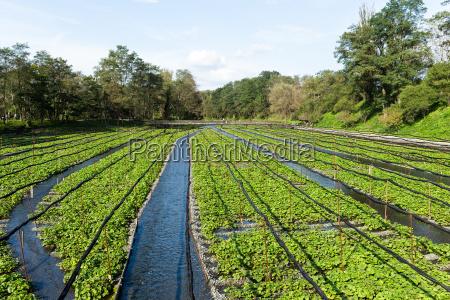 alimento ambiente tempero fluxo asia agricultura