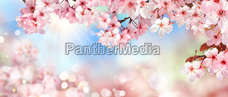 cenario da natureza na primavera flor