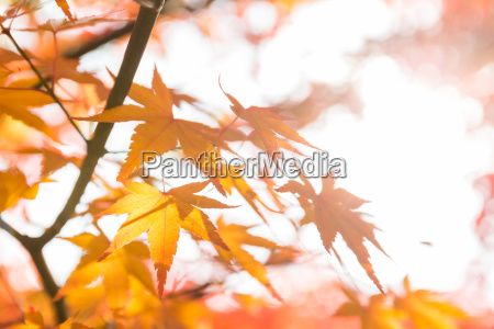 belo agradavel folha cor arvore parque