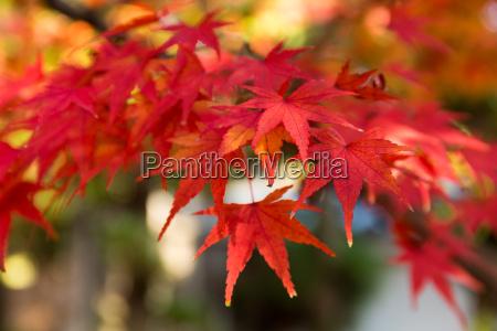 belo agradavel folha ambiente cor arvore
