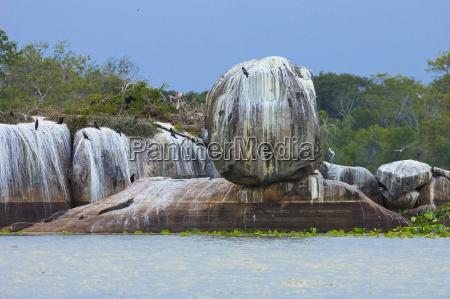 cor parque nacional asia crocodilo horizontalmente