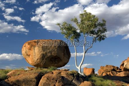 passeio viajar arvore rocha australia horizontalmente