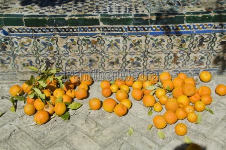passeio viajar europa espanha horizontalmente fruta