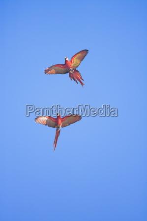 passeio viajar close up voo animais