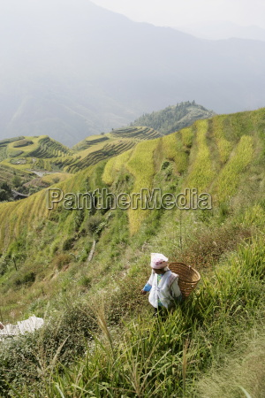 woman of yao tribe in ricefields