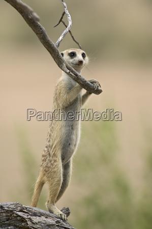 passeio viajar close up africa animais