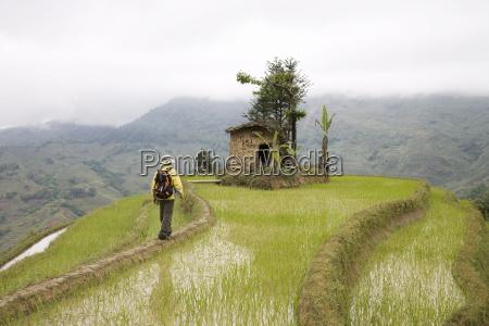 trekker in terraced rice fields yuanyang