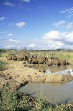 passeio viajar ambiente cor animal africa