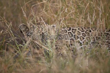 cor animal selvagem africa animais face