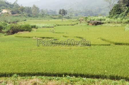 rice terraces in shuimann wuzhishan district