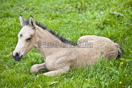 passeio viajar cor cavalo animal animais