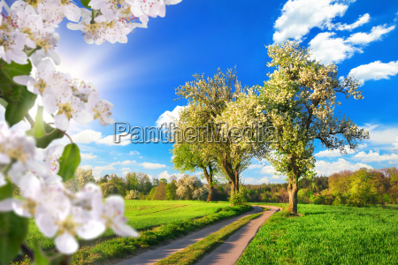 a paradise in spring idyllic landscape
