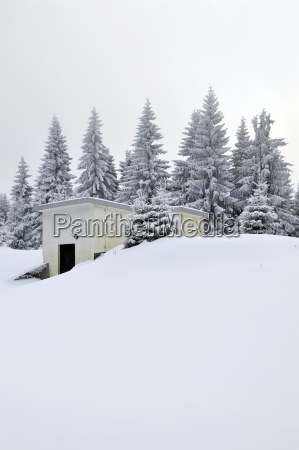 passeio viajar arvore inverno alemanha ao