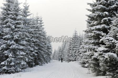 passeio viajar esporte esportes arvore inverno