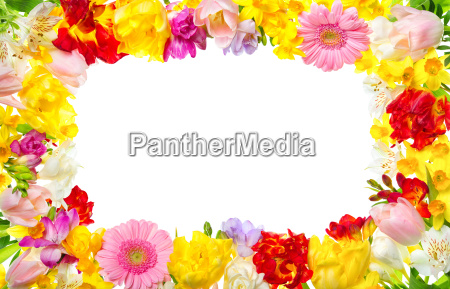 frame from colorful flowers with white