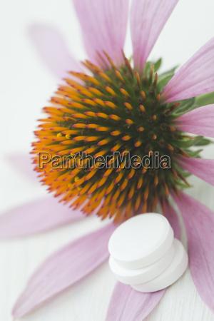acordo saude flor planta madeira drogas