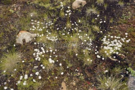passeio viajar pedra solo botanica suecia