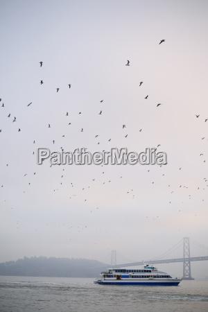 passeio viajar animal passaro trafego ponte