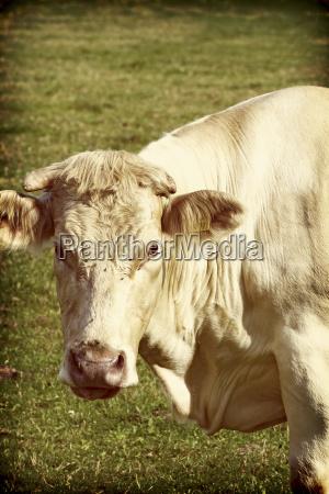animal mamifero agricultura retrato retrato animais