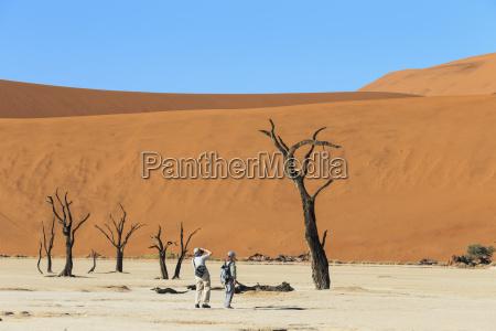 passeio viajar lazer arvore deserto ferias